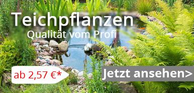 teichpflanzen banner
