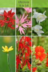 6 er Set Teichpflanzen für die Uferzone (0-10 cm)