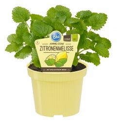 2 er Set Bio Zitronenmelisse