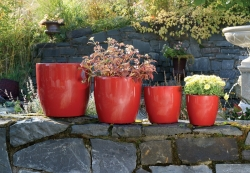 Emsa Pflanztopf, Blumentopf rubin rot, glänzend