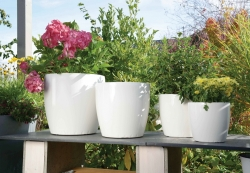 Emsa Pflanztopf, Blumentopf weiß, glänzend