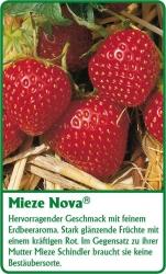 Erdbeerpflanze - 6 Stück Mieze Nova Fragaria ananassa