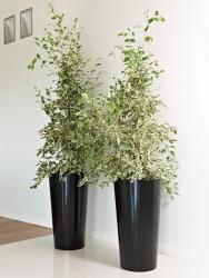 Tuit Pflanzküble, Blumenkasten schwarz