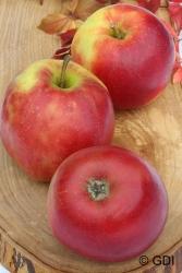 Apfelbaum Buschspiendel - Jonagold MM 111