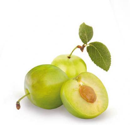 Pflaume 'Reine Claude Verte' Prunus