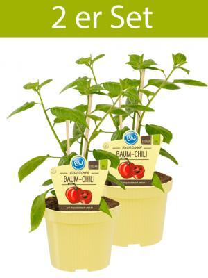 2 er Set BIO Bullhorn-Chili Capsicum annuum Bullhor