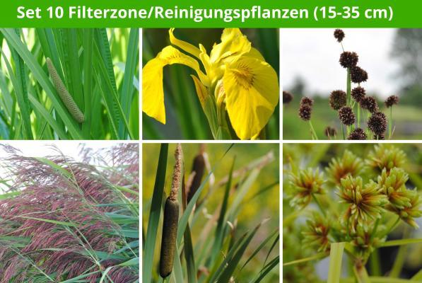 6 er Sortiment Filterzone/Reinigungspflanzen (15 - 35 cm)