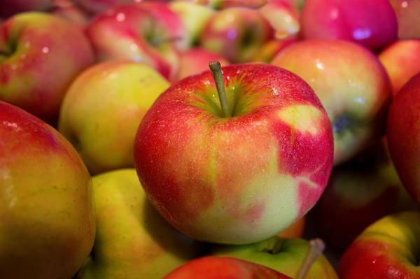Apfelbaum - Malus dom. Jonagold