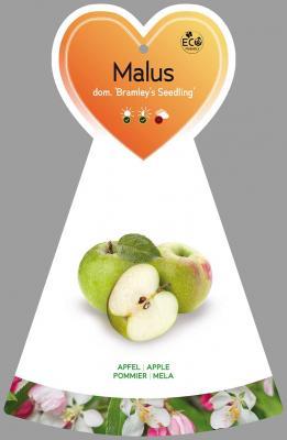 "Herbstapfel ""Bramley's Seedling"" Malus Busch"