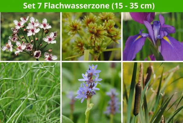 6 er Sortiment Flachwasserzone 2 (15 - 35 cm)