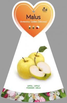 Apfelbaum Winterapfel 'Golden Delicious' Malus