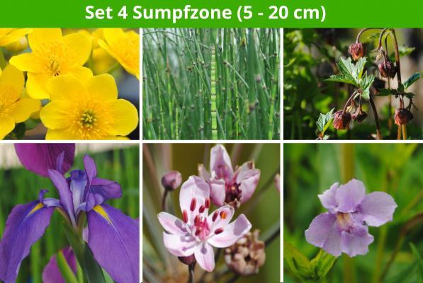 6 er Sortiment Sumpfzone 1 (5 - 20 cm)