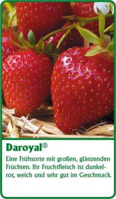Erdbeerpflanze - 12 Stück   Darselect Fragaria ananassa