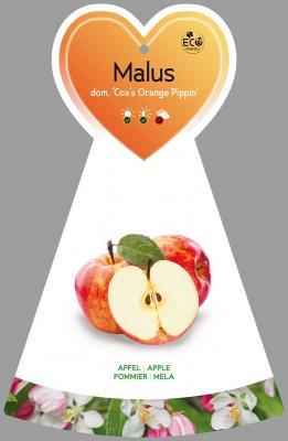 Apfel 'Cox's Orange Pippin'