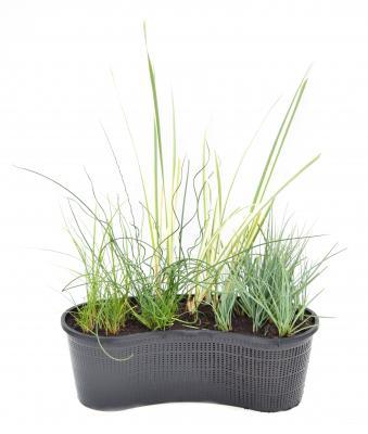 Nierenkorb fertig bepflanzt Gräser Mix I