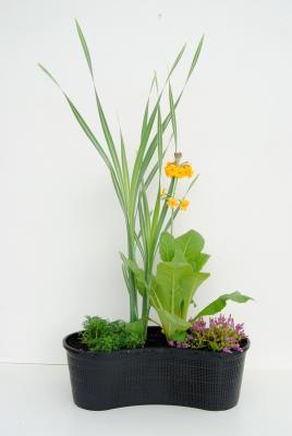 Nierenkorb fertig bepflanzt Gräser und Blühpflanzen Mix II