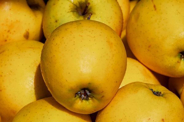 Apfelbaum - Malus dom. Golden Delicious