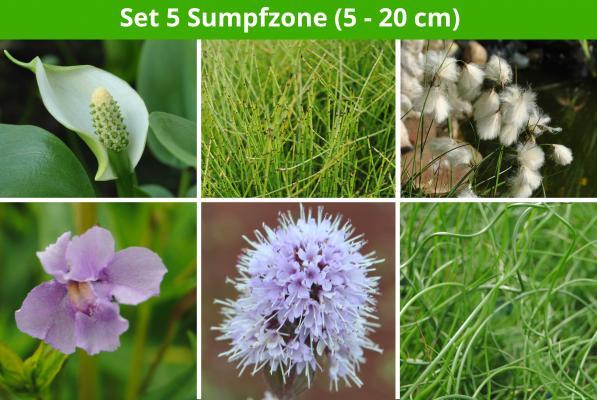 6 er Sortiment Sumpfzone 2 (5 - 20 cm)