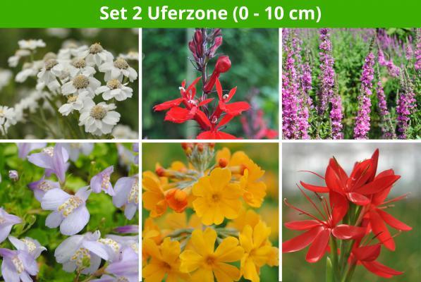 6 er Teichpflanzen Set Uferzone 2 (0 - 10cm)