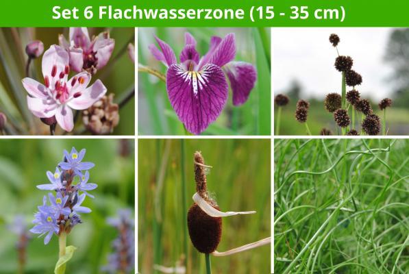 6 er Sortiment Flachwasserzone (15 - 35 cm)