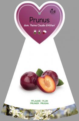 Pflaume 'Reine Claude d'Althan' Prunus