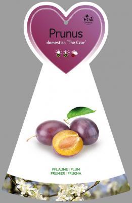 Pflaume 'The Czar' Prunus