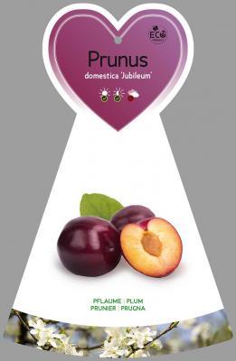 Pflaume 'Jubileum' Prunus