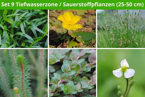 6 er Sortiment Tiefwasserzone/Sauerstoffpflanzen 2 (25 - 50 cm)