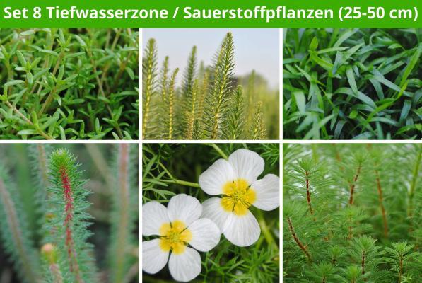 6 er Sortiment Tiefwasserzone/Sauerstoffpflanzen (25 - 50 cm)