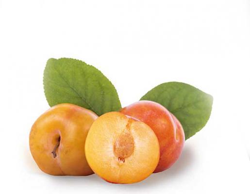 Mirabellen-Aprikose 'Aprimira' Prunus