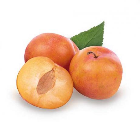 Pflaume 'Victoria' Prunus