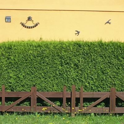 Eibe -Taxus baccata Hecke