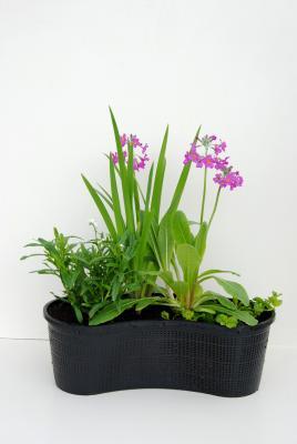 Nierenkorb fertig bepflanzt grün und Blühpflanzen Mix I