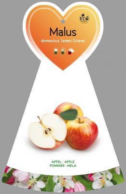 Apfelbaum Sommerapfel 'James Grieve' Malus