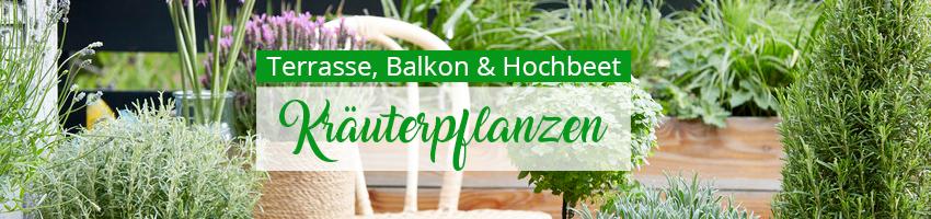 Kräuterpflanzen