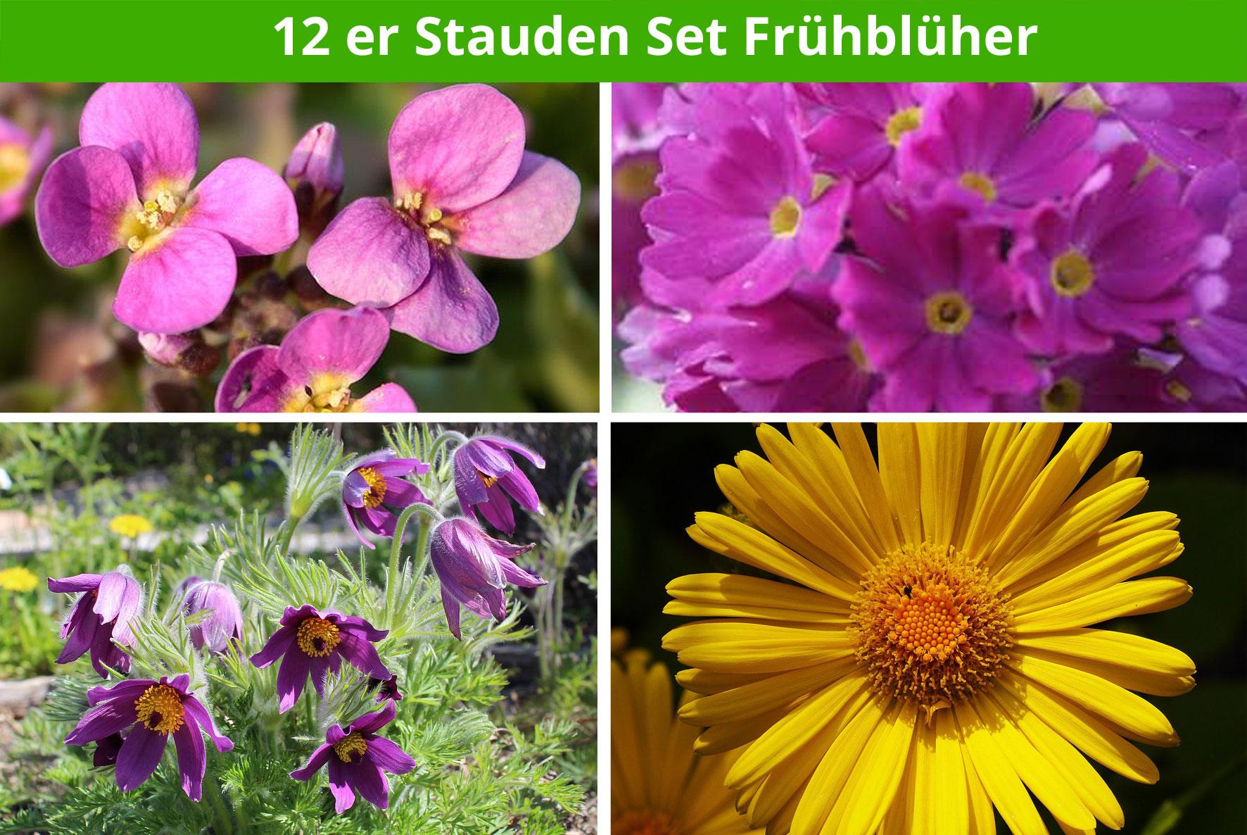 Top 12 er Stauden-Set 'Frühlingsblüher' | online kaufen #PH_59